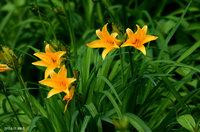 開花数がどんどん増えています