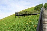 ニッコウキスゲ 700段から上満開 700段から下ピーク過ぎ