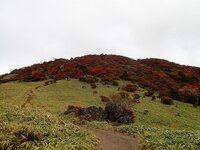 紅葉 丸山登山道