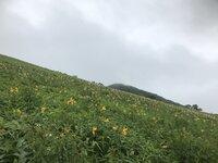 ニッコウキスゲ 500段より上 4~6分咲き